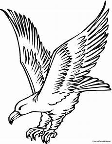 aigle dessin facile dessin de aigle les dessins et coloriage