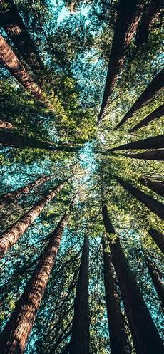 Tree Wallpaper Iphone 11