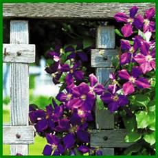 Rankhilfen Für Kletterpflanzen - rankhilfen f 252 r kletterpflanzen f 252 r w 228 nde ist ein spalier gut