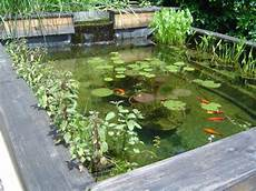 Plantes A Bassin De Jardin Bassin De Jardin