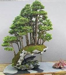 Pin U Te Auf Bonsai Miniaturgarten Bonsai