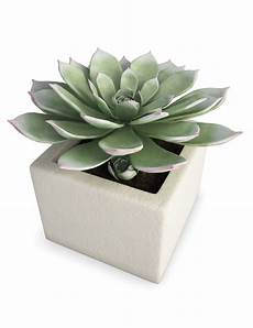 interior succulent plant 3d model for in max 2014