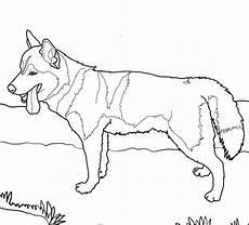 siberian husky coloring page husky siberiano