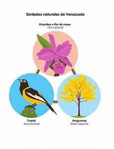 dibujo de la flor nacional de venezuela gu 237 a caracol integral 1 by santillana venezuela issuu