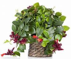 les 25 meilleures id 233 es de la cat 233 gorie plantes