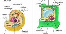 Teori Sel Biologi Sel