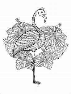 Ausmalbilder Erwachsene Drucken Ausmalbilder Flamingo Kostenlos Malvorlagen Windowcolor