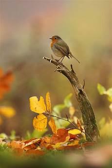 vogel malvorlagen lyrics aglhk