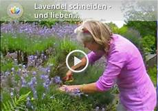 Lavendel Pflanzen Dr Schweikart Verlag