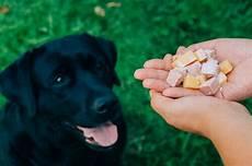 alimenti provocano coliche ai neonati cosa provoca la flatulenza nei cani i miei animali