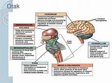Anfis Neurovaskuler