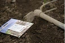 semer des carottes facilement 3 m 233 thodes jardipartage