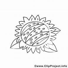 Malvorlagen Sonnenblumen Ausdrucken Malvorlage Sonnenblume