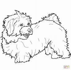 malvorlage malteser hund batavusprorace