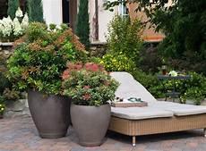 kuebelpflanzen fuer terrasse terrassengestaltung mit k 252 belpflanzen