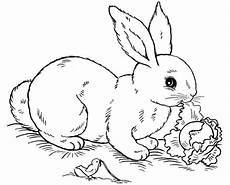 Hasen Malvorlagen Kostenlos Free Printable Rabbit Coloring Pages For