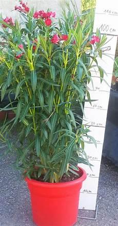 Plantes M 233 Diterran 233 Ennes Jardinerie P 233 Pini 232 Re 31270