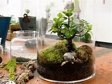 bild zu der mini garten im glas terrarium pflanzen