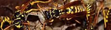 sterben bienen im winter wie 252 berwintern bienen und wespen kammerj 228 ger ratgeber