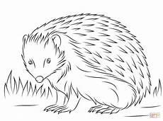 european hedgehog coloring page free printable