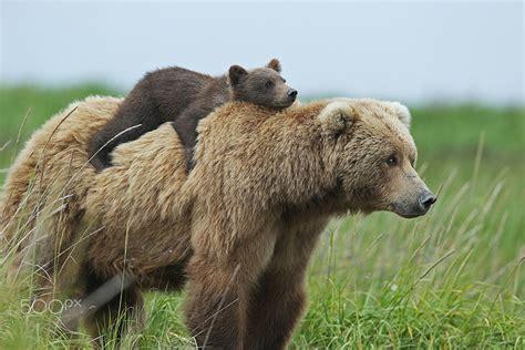 56 Un-bear-ably Cute Momma Bears Teaching Their Teddy