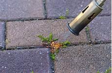 moos steinen entfernen moos entfernen auf terrasse und gehweg 5 tipps