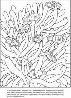 Unterwasserwelt Malvorlagen Rom Malvorlagen Unterwasserwelt Rom Tiffanylovesbooks