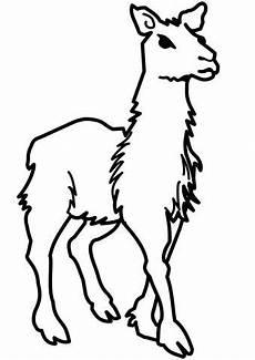 junges lama ausmalbild ausmalbilder tiere animals