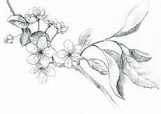fleur de cerisier dessin cherry blossom tatouage cerisier fleur de cerisier