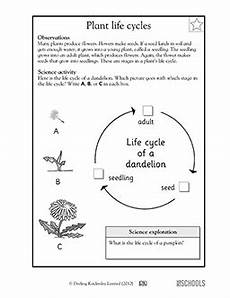 science worksheets about plants for grade 1 12109 1st grade 2nd grade kindergarten science worksheets plant cycles science worksheets