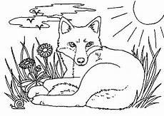 Kostenlose Ausmalbilder Zum Ausdrucken Fuchs Malvorlagen Fur Kinder Ausmalbilder Fuchs Kostenlos