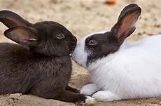 pflegeleichte haustiere zum kuscheln 12 tipps und wissenswertes f 252 r kaninchenhalter kuriose