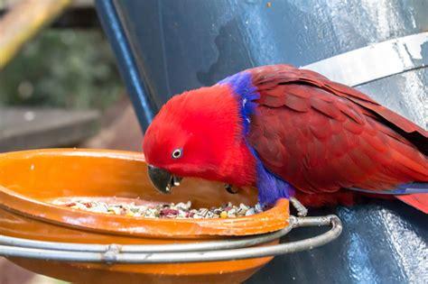 Funny Parakeet Names