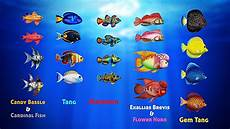 Gambar Ikan Ikan Gambar Ikan Hd
