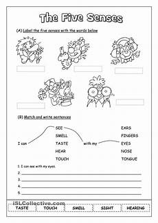 five senses worksheets second grade 12663 pin on learning
