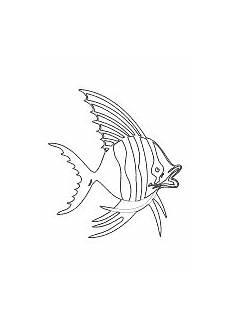 malvorlage fisch mit bildern fische ausmalbilder