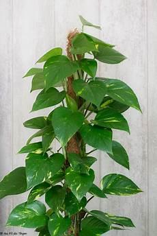 plante d intérieur haute 3 id 233 es de plantes d int 233 rieur se plaisant 224 l ombre au