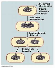 knowledge class reproduction in bacteria