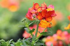 Blumen Sonniger Standort - 13 balkonpflanzen f 252 r sonnige s 252 d west balkone