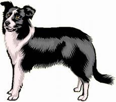 Ausmalbilder Hunde Border Collie Bordercollie20 Bild