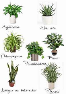Les Plantes D Int 233 Rieurs Que Choisir Entre Zen Et D 233 Co
