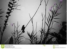 Malvorlage Vogel Mit Blume Abstrakter Bild Schwarz Vogel Im Schattenbild Mit Einer