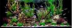 aquarium deko ideen deko f 252 r aquarium selber machen 30 kreative ideen