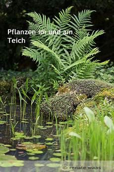 Pflanzen Am Teich Gartenblog Geniesser Garten Pflanzen Fuer Den Teich Wasserpflanzen Und Uferbepflanzung Am