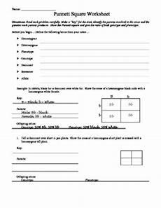 punnett square worksheet by aussie science teacher tpt