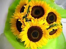 significato girasole nel linguaggio dei fiori girasoli significato significato fiori girasoli