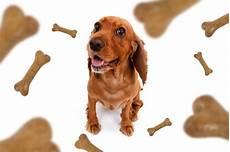Welches Hundefutter Ist Das Beste - hochwertiges hundefutter aber welches ist wirklich gesund