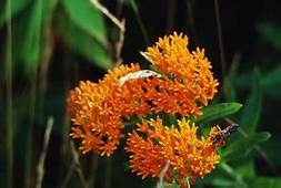 Difference Between A Butterfly Bush & Weed