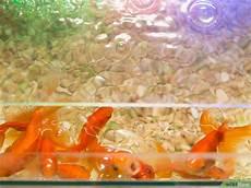 goldfische f 252 ttern wikihow