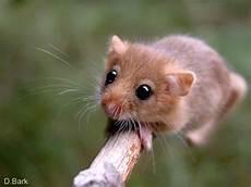 Kleine Haustiere Liste - rastafari nagetiere rodents